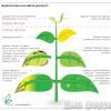 Диагностика состояния растения.