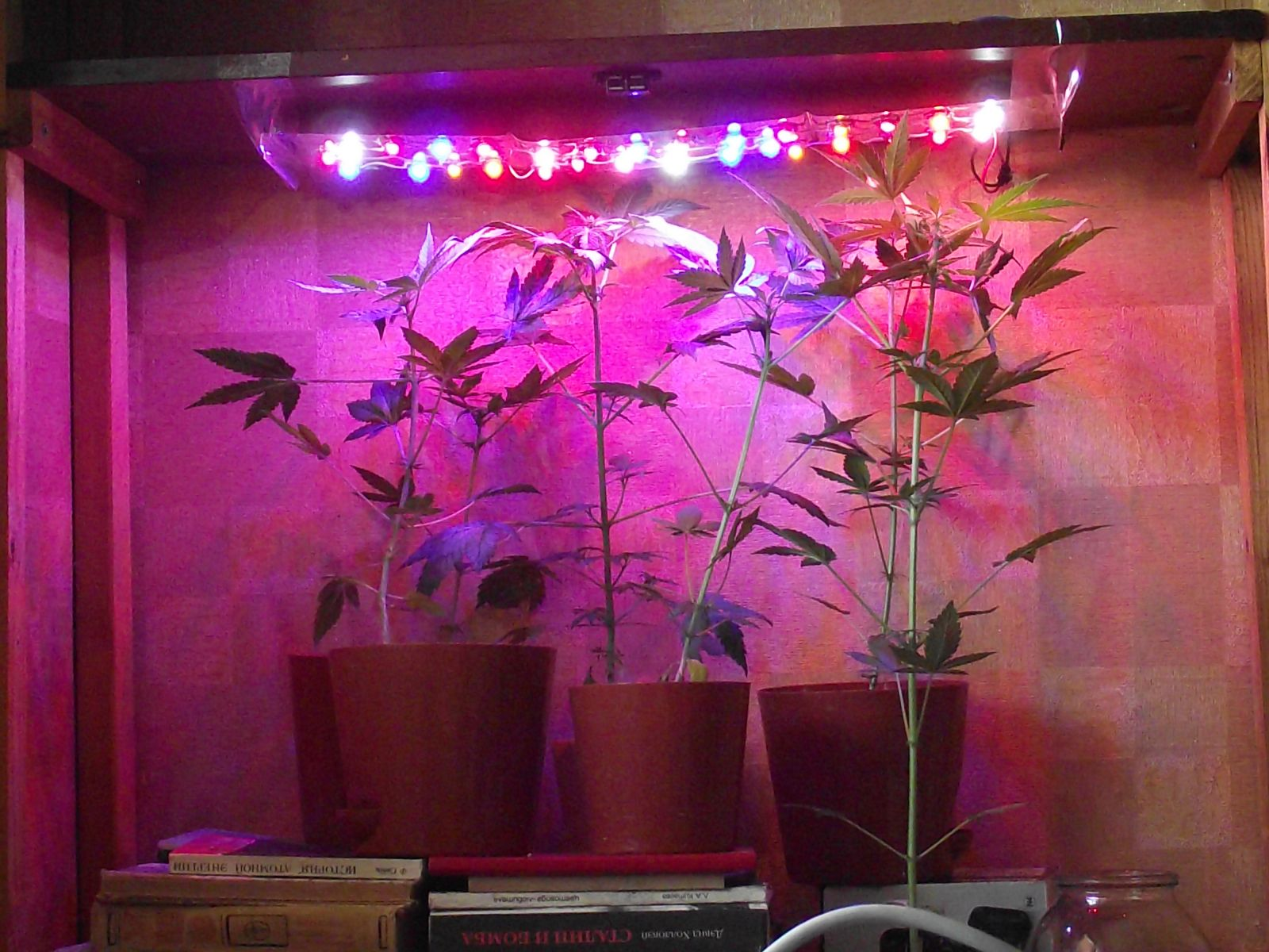 Биколорные лампы для рассады 104