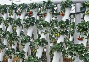 post-5005-0-31103900-1359478307_thumb.jp