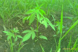 post-8470-0-16768800-1369987764_thumb.jp