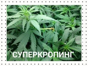 post-23388-0-31638100-1465233663_thumb.j