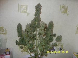 post-23590-0-38822000-1413631516_thumb.j
