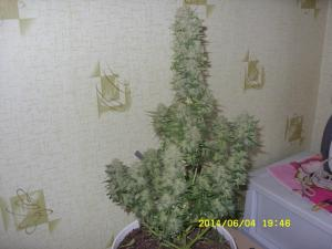 post-23590-0-94935800-1413631488_thumb.j