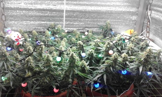 новогоднее настроение в моём лесу )))))).jpg