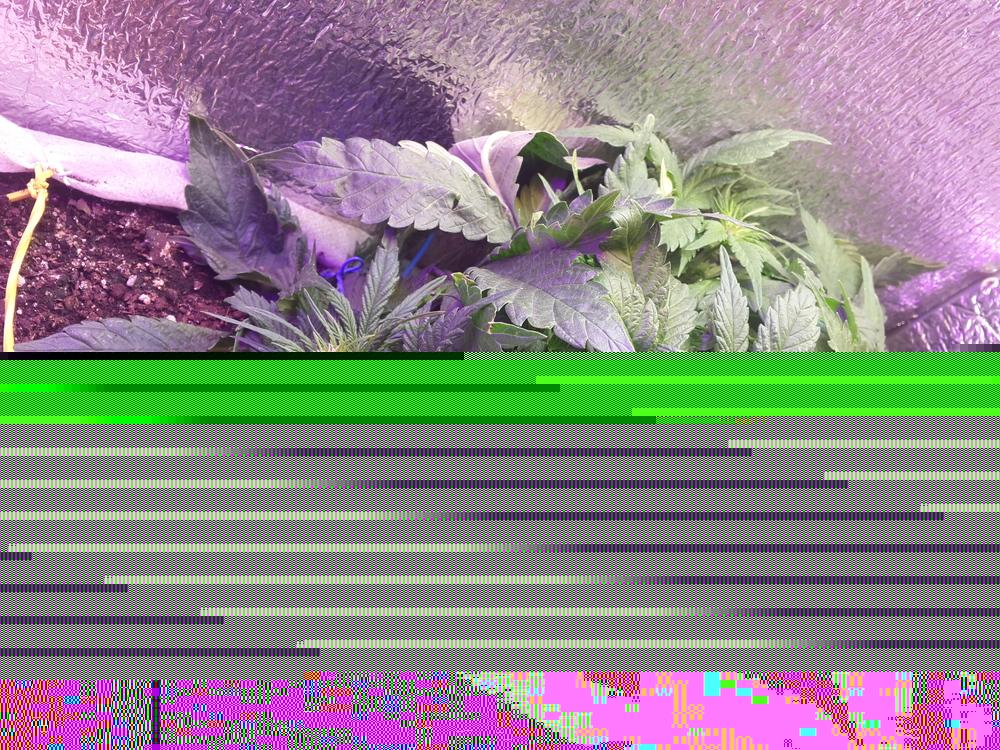 20170426_162404.thumb.jpg.ff39e130d40354b686389c54c39eadf3.jpg