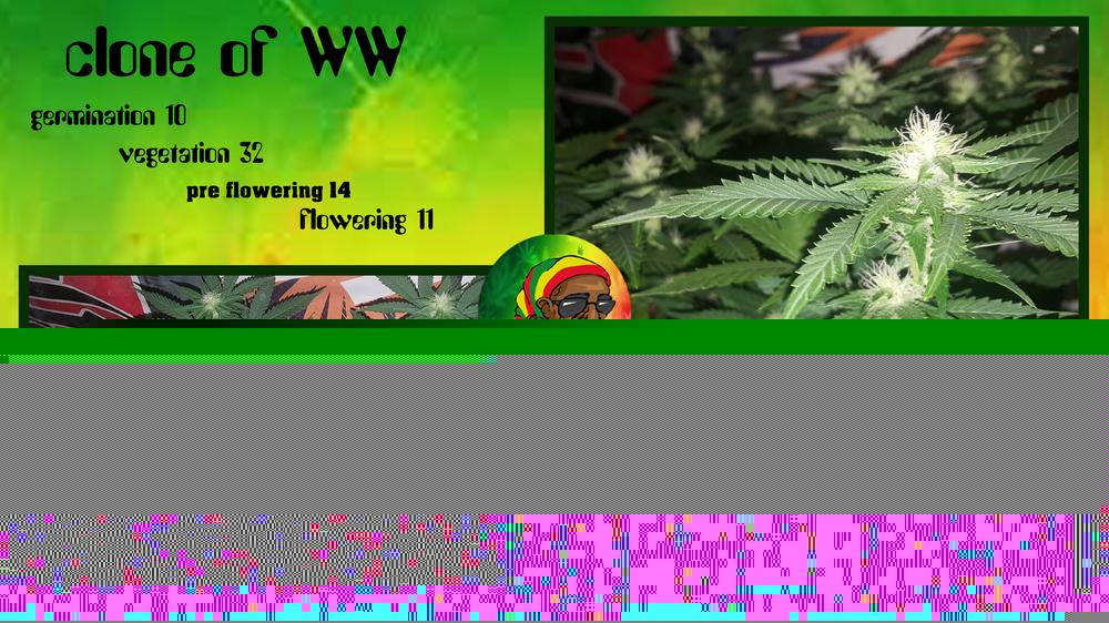 592939e96888d_cloneofWW10-32-14-11.thumb.jpg.0819bd8430f8dd4cd856660bffe642e8.jpg