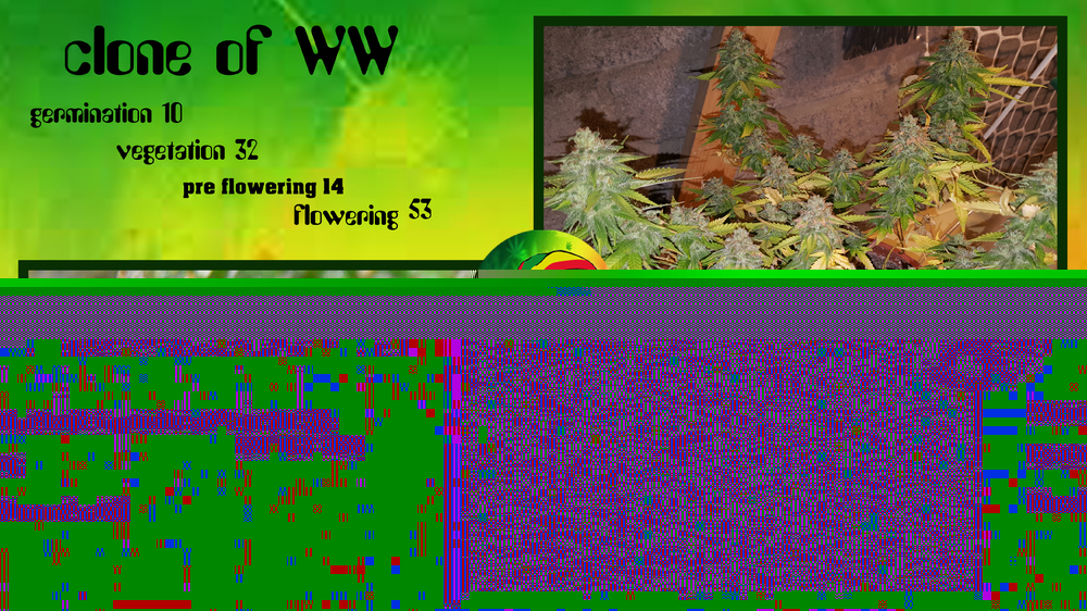 59293a0906d54_cloneofWW10-32-14-53.thumb.jpg.625a4e8626cf54c7856a1a742eea7b6a.jpg