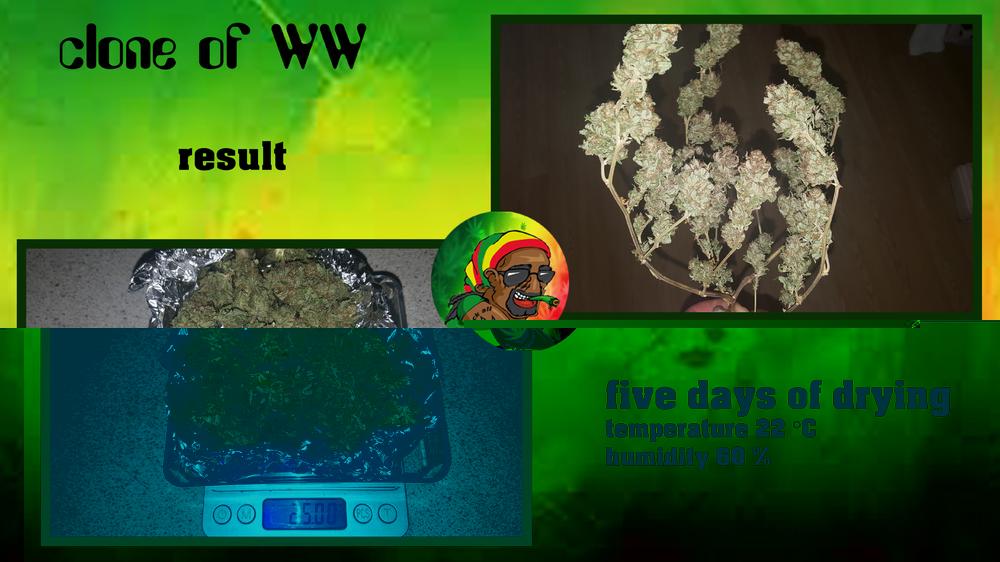 59293a1397d81_cloneofWWresult.thumb.jpg.c09f903c594445da29caf1e35378a095.jpg