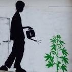CannabisGodfather