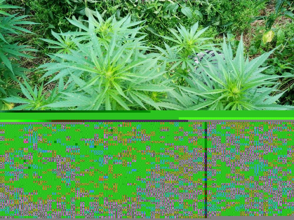 IMG_20170703_114354.thumb.jpg.5b17dcdd0241c174ade1a52afe807e46.jpg