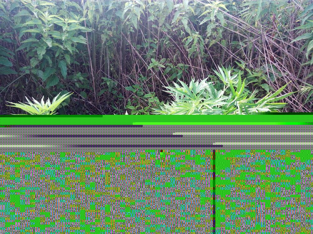 IMG_20170716_100433.thumb.jpg.365d5d63f5d9b0fa8091fee360f351a7.jpg