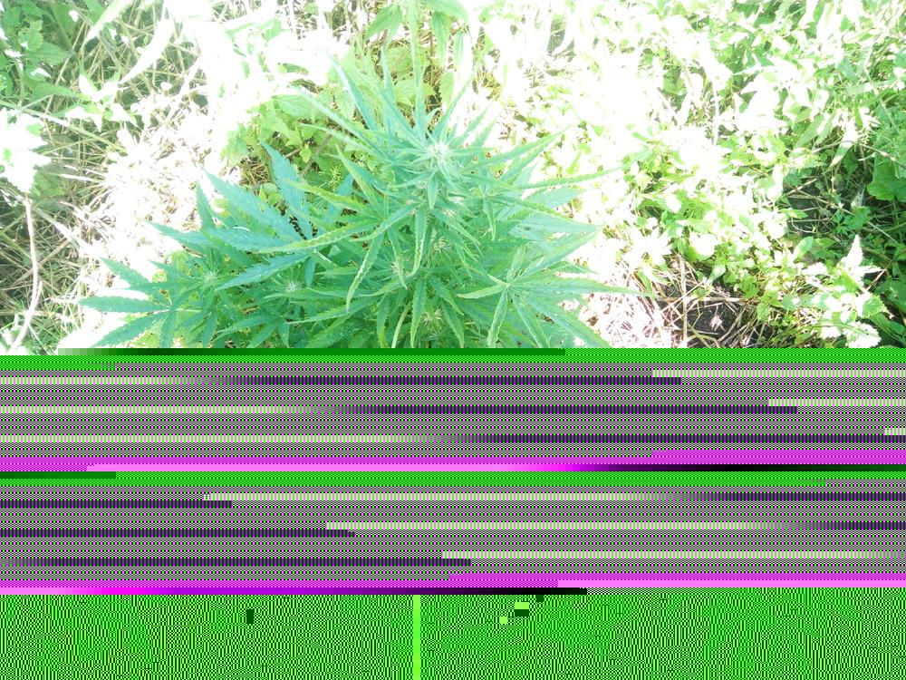 IMG_20170716_100745.thumb.jpg.4656749dbb568f6d2777c02c59b0d848.jpg