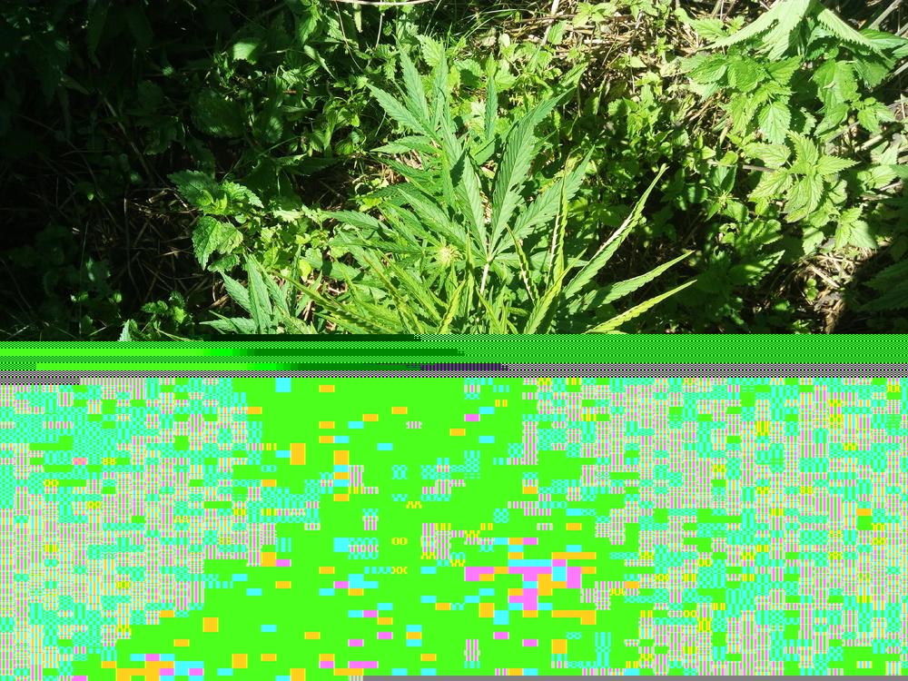 IMG_20170716_100812.thumb.jpg.d42f05e052647e801ee775e38b88af9e.jpg