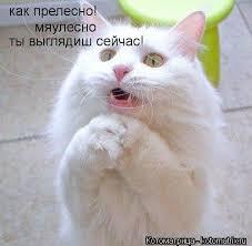 images.jpg.d42a5aefab87da81a6a328b9598a40a9.jpg