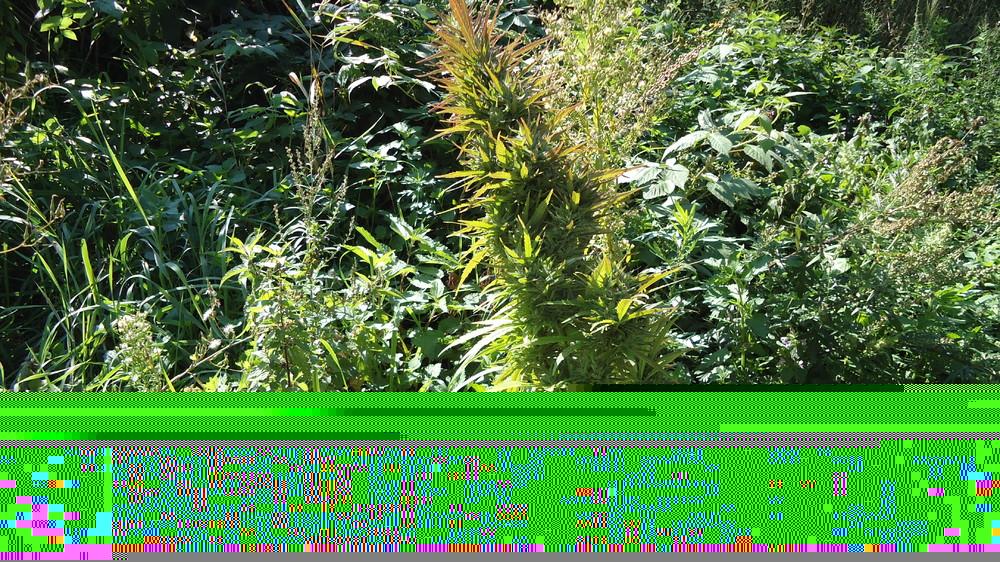 DSC07601.thumb.JPG.432940da77429e536ec6880e947c8611.JPG
