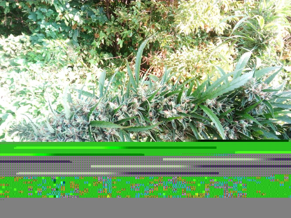 IMG_20170904_101329.thumb.jpg.9f120bc4b226d7f9fe0127548fbcc70c.jpg