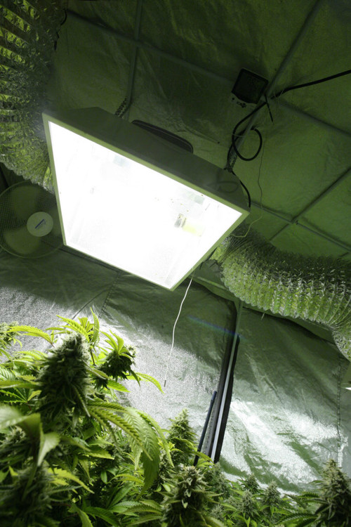 Week-4C-In-a-smaller-home-grow-tent-683x1024.jpg