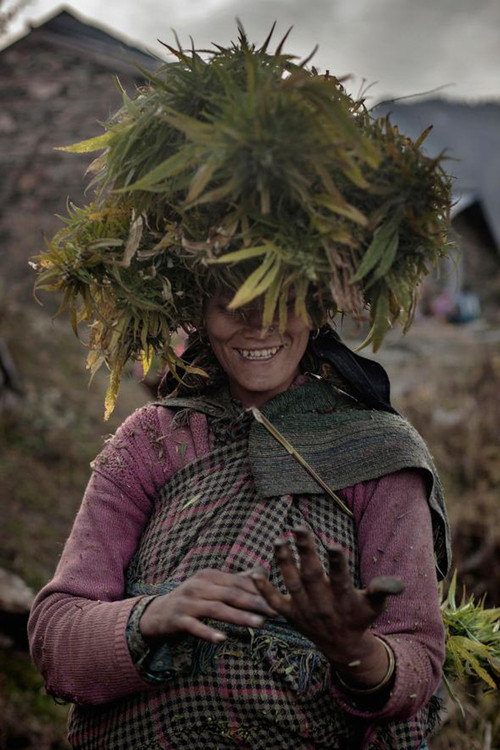 Inside-The-Secret-Weed-Growers-of-Himalayan-Mountains-13-of-17.jpg