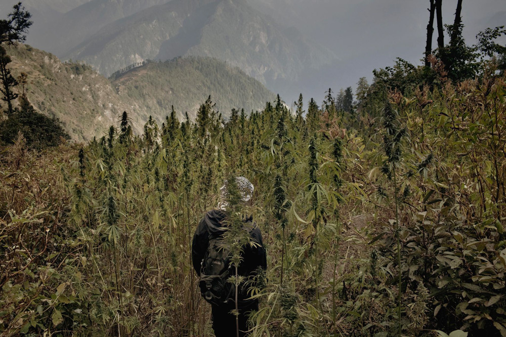 Inside-The-Secret-Weed-Growers-of-Himalayan-Mountains-17-of-17.jpg