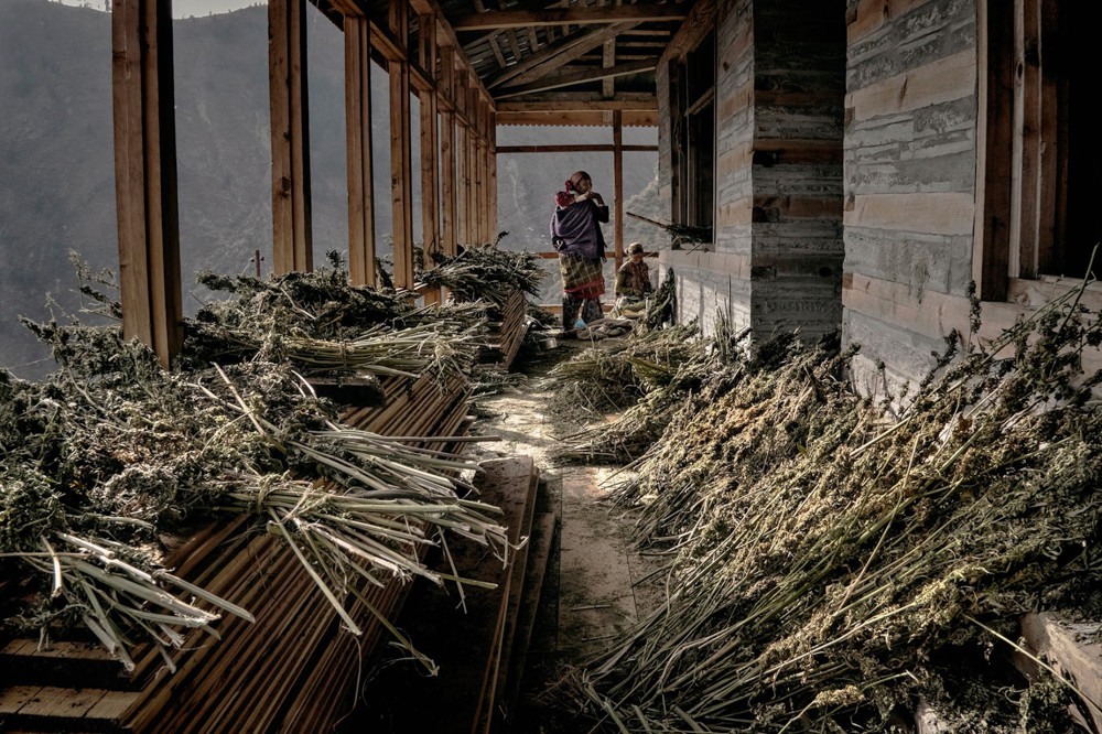Inside-The-Secret-Weed-Growers-of-Himalayan-Mountains-7-of-17.jpg