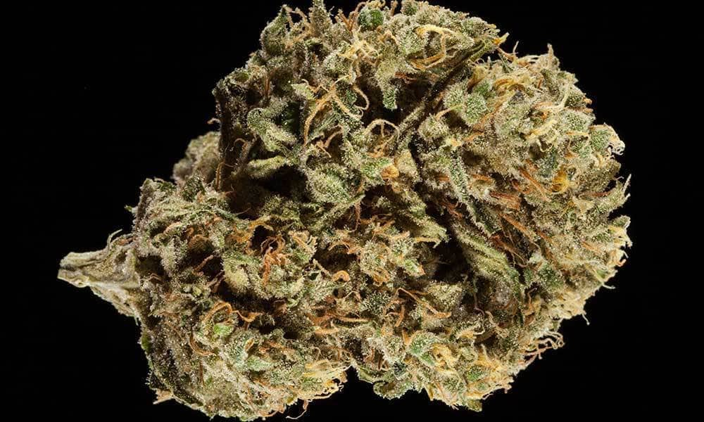 Work-Out-Strains-Durban-Poison.jpg
