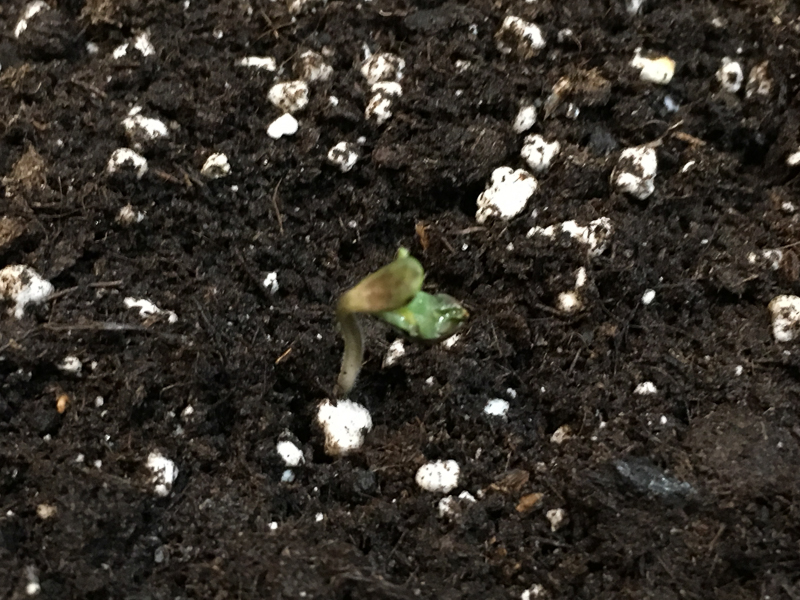 grow-12.jpg