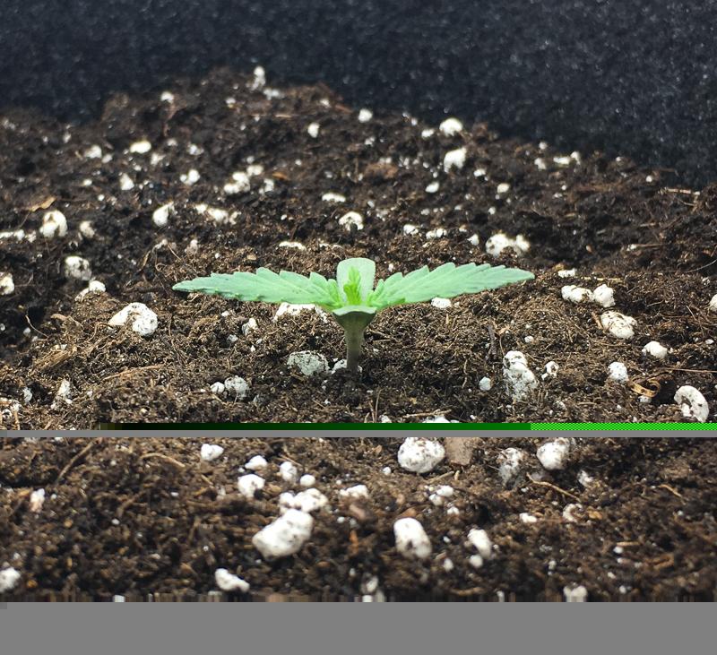 grow-20.jpg
