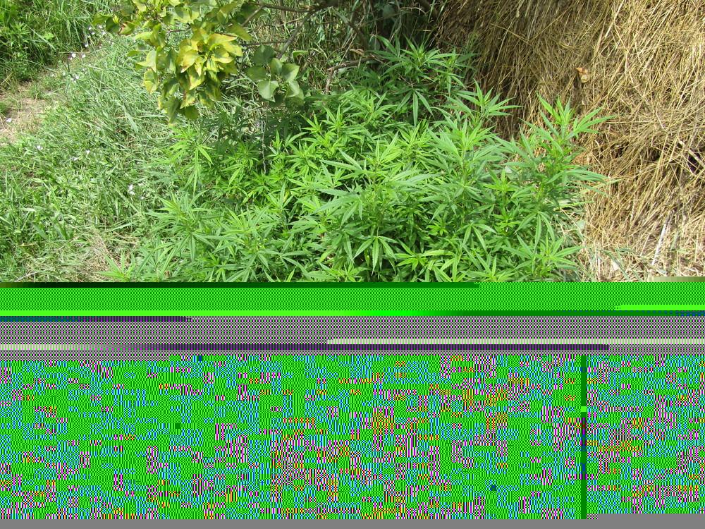 IMG_0023.thumb.JPG.4ee8b580aab32cfab762a38a84967e74.JPG