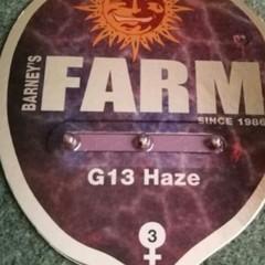 """G 13 Haze""  - Barney's Farm"