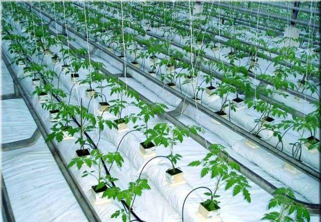 Гидропонные системы для конопли семена конопли какие купить