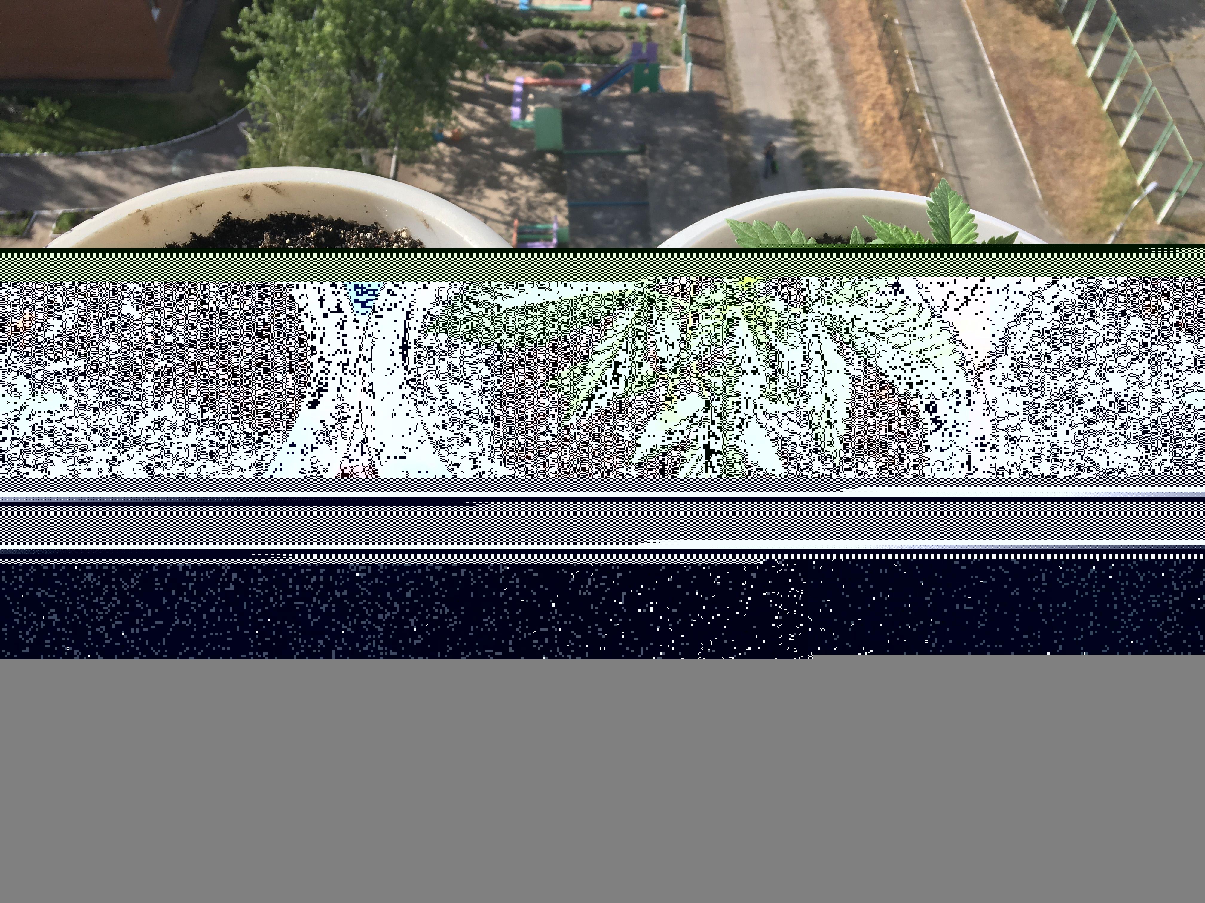 Выращивание конопли в домашних условиях почва фото наркотика марихуана