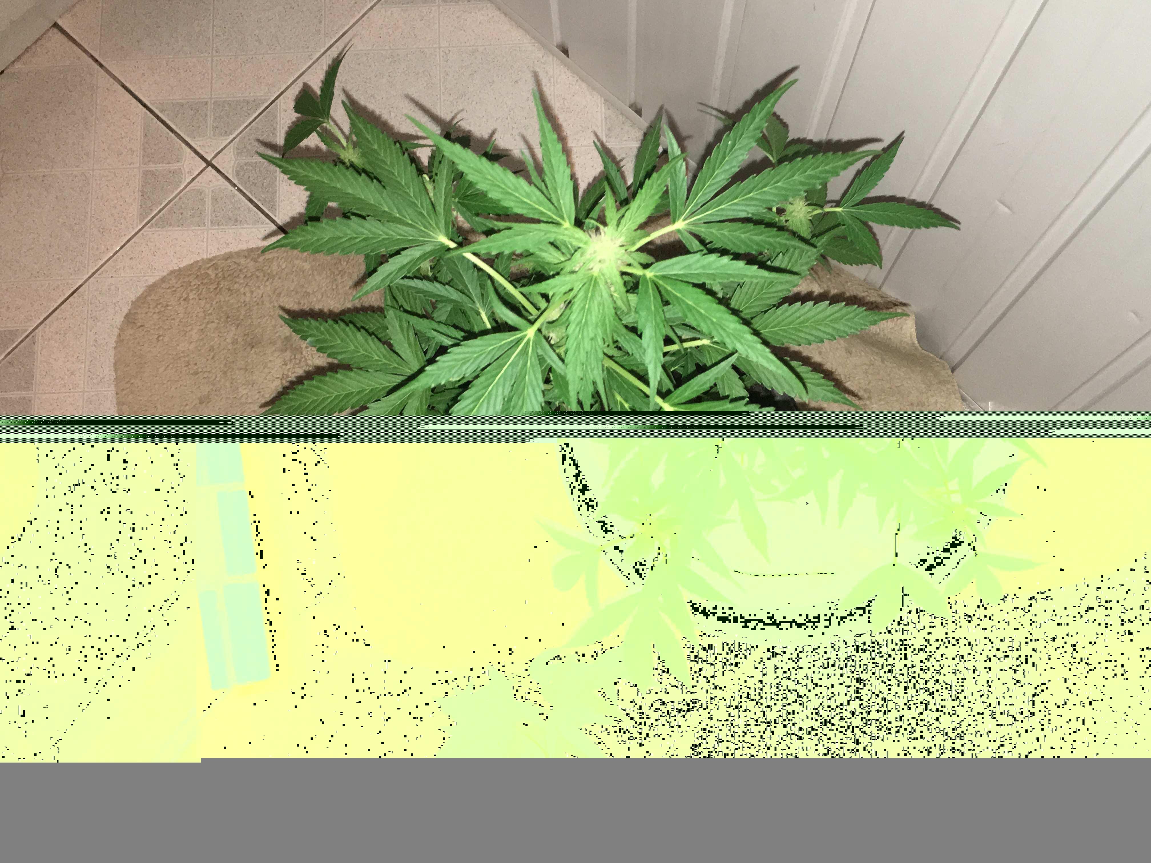 Реп про марихуану скачать как высушить шишки конопли