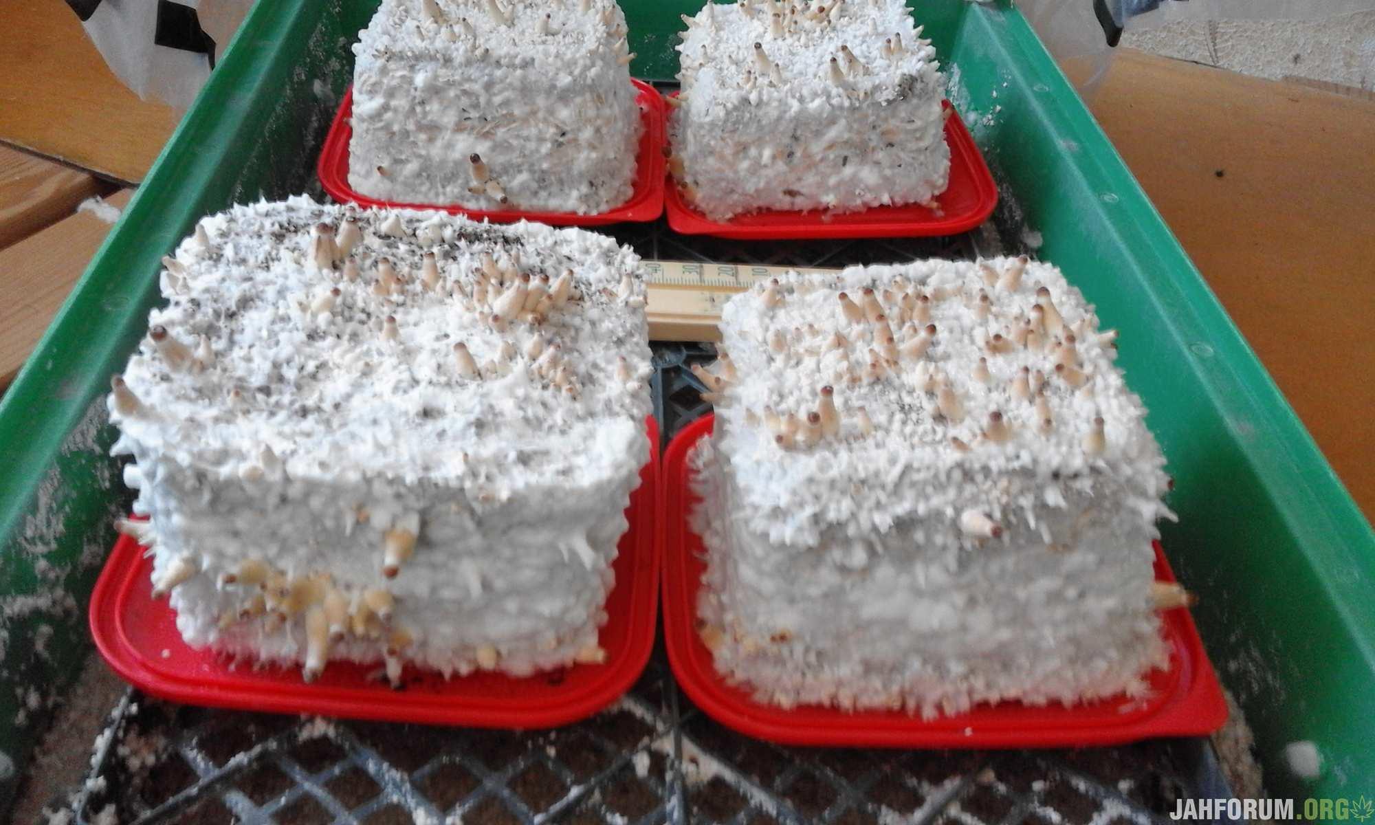 киевские тортики
