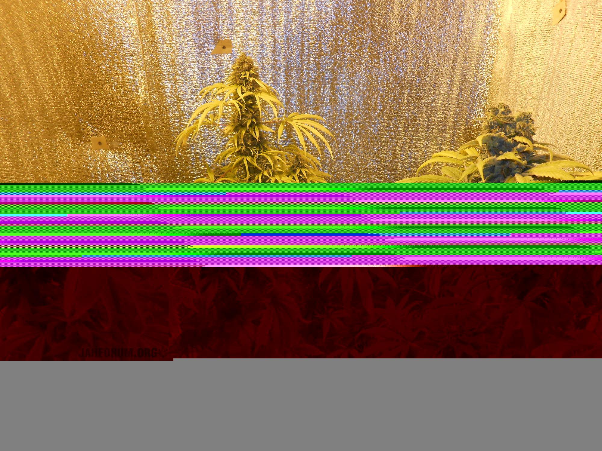 large.DSCN6893.JPG.1990a3a19151f8e10a61b8c52c00285a.JPG