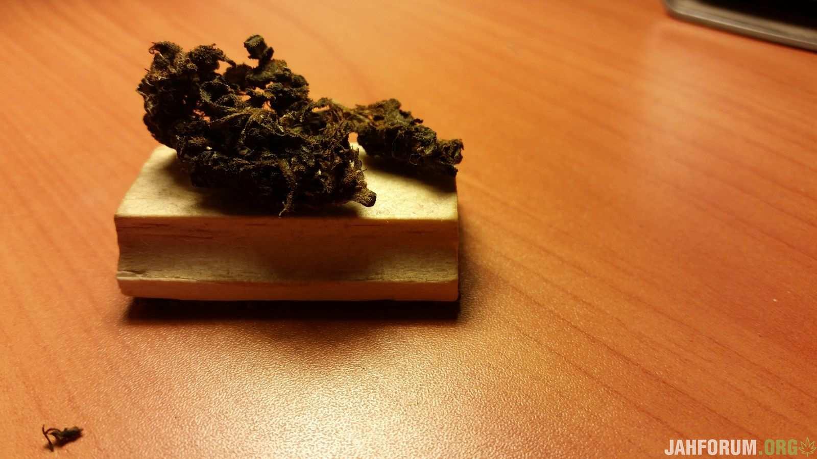 растение ферментировано Байкалом-М (1 мес).
