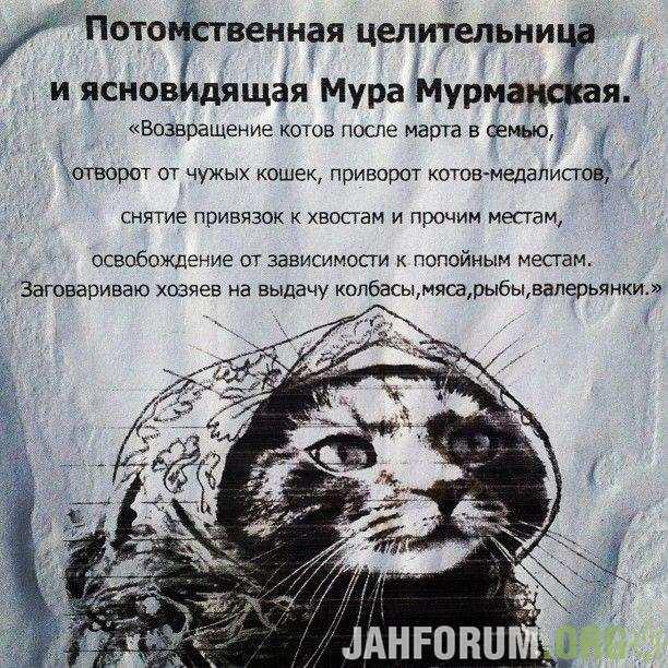 1369675438 lol54.ru 001
