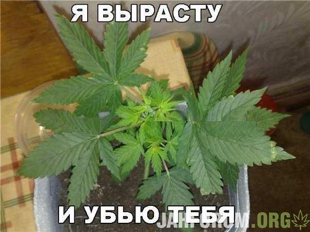 Чёткие картинки по знакомой тематике)))