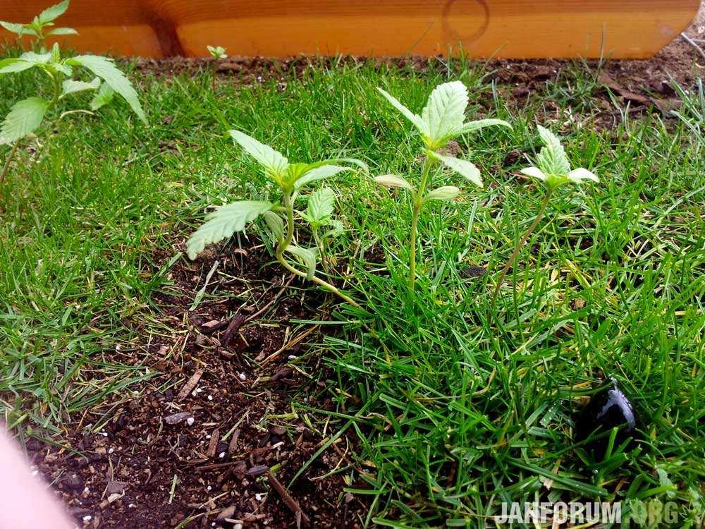 growing-outdoors-dirt-wild.jpg
