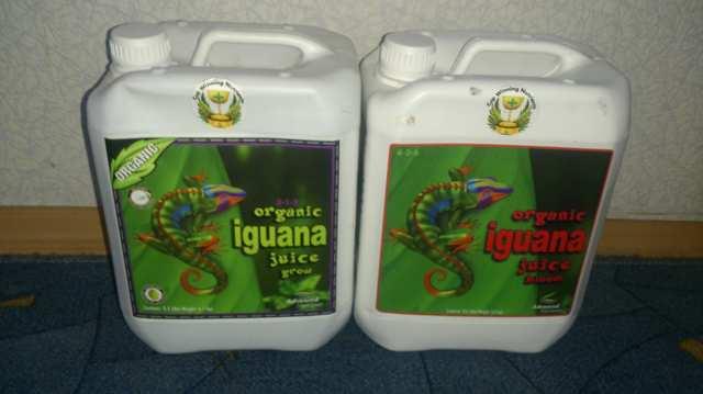 Iguana Organic.JPG
