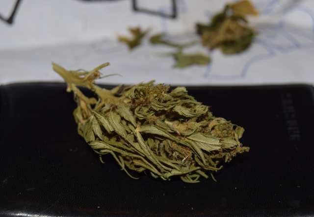 Last bud of Vietnam sativa
