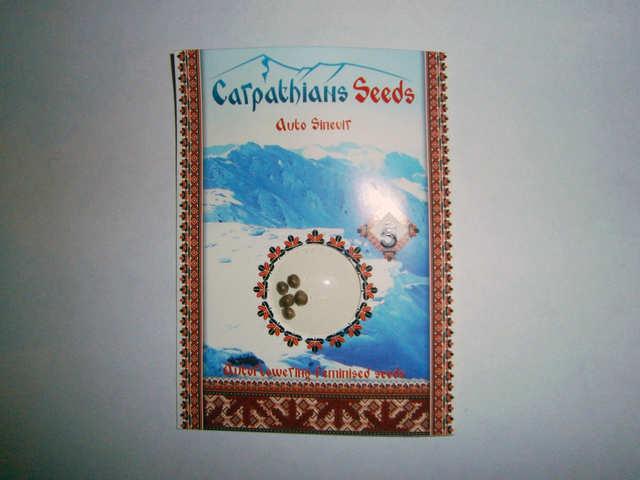 Auto Sinevir  (Carpathians Seeds)