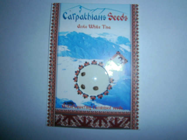 Auto White Tisa  (Carpathians Seeds)