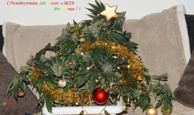 C Рождеством!!!