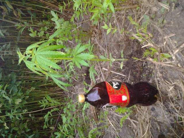 Шофт и бутылка