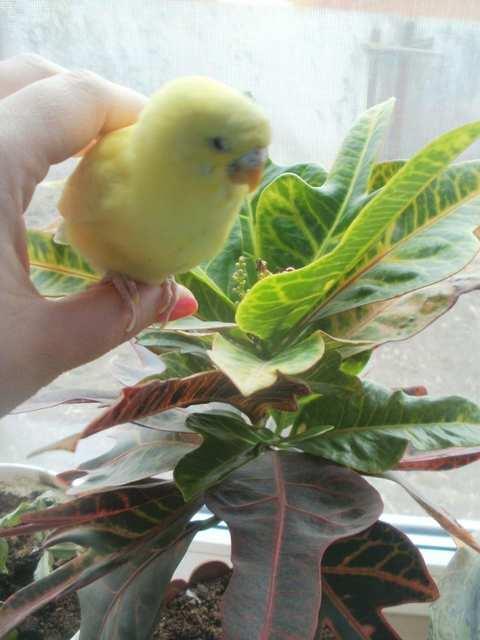 Любитель семян Кешка
