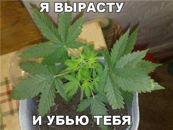 EB3zViG8ea4