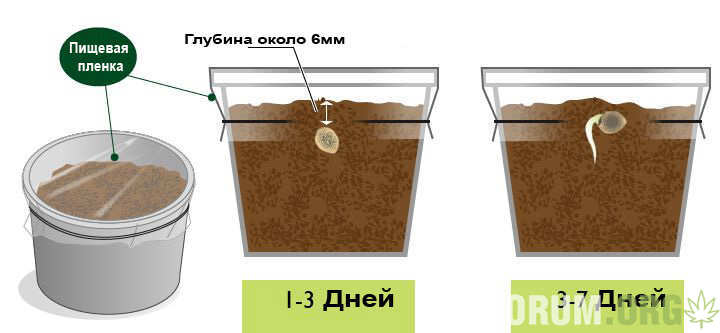 germination-cannabis-seeds.jpg.bb893d6d33c90c9fcb7c40d2981d1e6d.jpg
