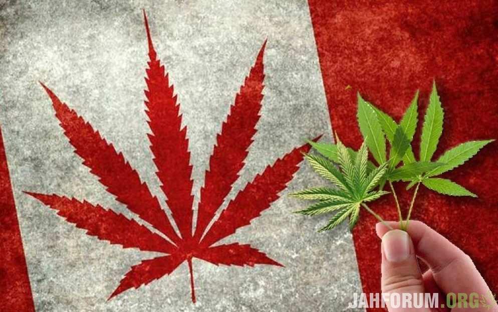 В Канаде образовались очереди за марихуаной