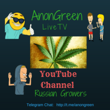 AnonGreen