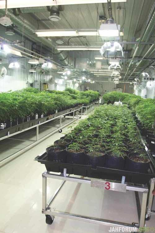 inside-aurora-cannabis-worlds-biggest-grow-2.jpg